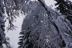 Winterwald in Vologda Lizenzfreie Stockbilder
