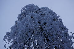 Winterwald in Vologda Stockbild