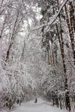 Winterwaldgasse Lizenzfreies Stockfoto
