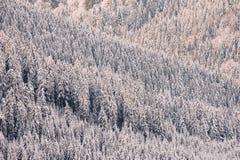Winterwaldhintergrund Stockfoto