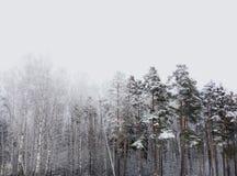 Winterwaldkrieg Stockfoto