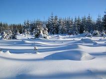 Winterwaldland Stockfoto