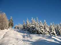 Winterwaldland Lizenzfreie Stockbilder