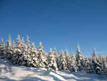 Winterwaldland Stockbild