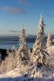 Winterwaldlandschaft, Kola Peninsula, Russland lizenzfreies stockbild