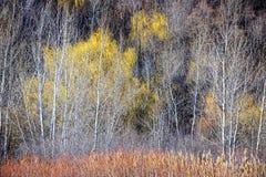 Winterwaldlandschaft mit bloßen Bäumen Lizenzfreie Stockbilder