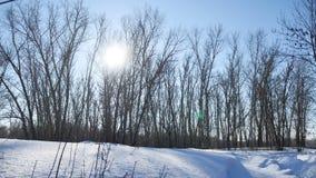 Winterwaldnaturbäume im Schneegrellen glanz der Sonne, Sonnenlichtlandschaft stock footage