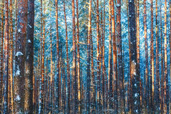Winterwaldnaturschnee-Holzhintergrund lizenzfreie stockbilder
