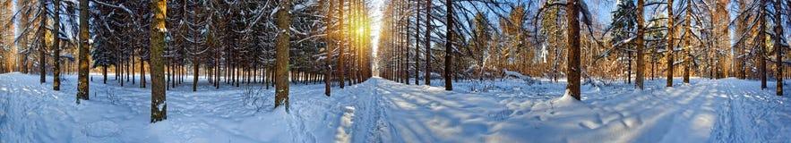 Winterwaldpanorama Stockfoto
