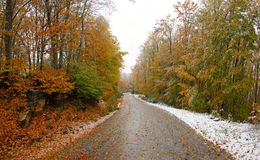 Winterwaldpfad Lizenzfreie Stockfotografie