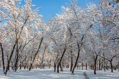 Winterwaldschneepark Stockfotos