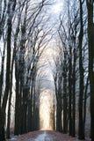 Winterwaldsonnenuntergang Lizenzfreies Stockbild