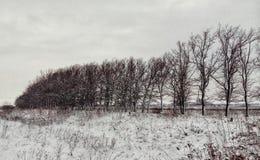 Winterwaldung in der Landschaft Lizenzfreies Stockfoto