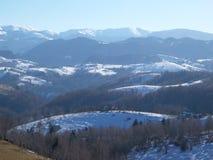 Winterwaldvorschau Stockfotografie