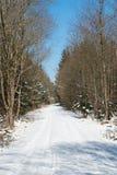 Winterwaldweg Stockbilder