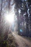 Winterwaldweg Lizenzfreies Stockbild