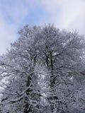 Winterwaldweg stockbild