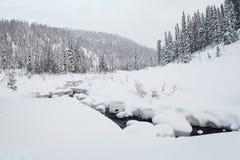 Winterwanderung in der Reserve 'Kuznetsky Alatau ' stockbild