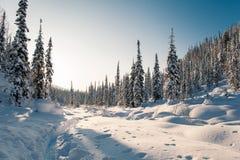 Winterwanderung in der Reserve 'Kuznetsky Alatau ' stockfotos