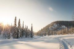 Winterwanderung in der Reserve 'Kuznetsky Alatau ' stockbilder