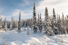 Winterwanderung in der Reserve 'Kuznetsky Alatau ' lizenzfreies stockfoto