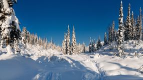 Winterwanderung in der Reserve 'Kuznetsky Alatau ' stockfoto
