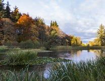 Winterwassergarten Lizenzfreie Stockfotos