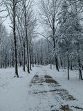 Winterweg Lizenzfreie Stockfotos