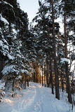 Winterweg Lizenzfreie Stockbilder