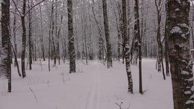 Winterweg im Park Mazurino stock video footage