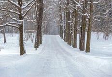 Winterweg im Park mit den Bäumen, die entlang der Straße wachsen lizenzfreie stockfotos