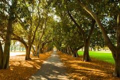 Winterwegweise in der Waldung von Bäumen Lizenzfreies Stockbild