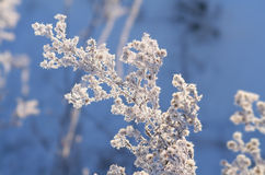 Winterweiß Stockfotos