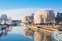 Winterweidebaum am Flussufer 2 Stockbild