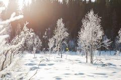 Winterweidelandschaft mit den eisigen Bäumen beleuchtete durch leicht- schneebedeckte Szene des weichen Sonnenuntergangs Landscha stockfotografie