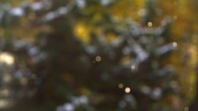 Winterwetter Fallender Schnee in den Zedernwaldschönen Schneeflocken vor einer Zeder im Holz Schneeflockenschimmer stock footage