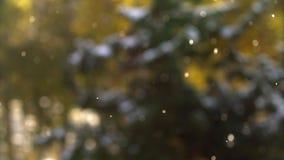 Winterwetter Fallender Schnee in den Zedernwaldschönen Schneeflocken vor einer Zeder im Holz Schneeflockenschimmer stock video