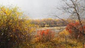 Winterwetter im Herbst: Schnee und Regen, die ständig auf Bäume mit sonnigem Licht, Gannan im November fallen stock video
