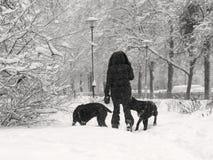 Winterwetter, Schneesturm, Stadt, Frau mit Hunden Lizenzfreies Stockfoto