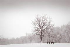 Winterwiese mit einsamem Eichenbaum Lizenzfreie Stockfotografie