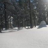 winterwonderland 图库摄影