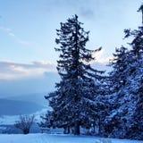 winterwonderland Zdjęcia Stock