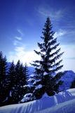 Winterwonderland. Fir tree along hiking trail to Brunnihütte Stock Photography