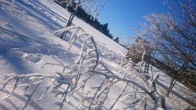 Winterwonderland. Frost blue sky glitzer trees Stock Image