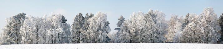 Winterwonderland. Panorama of trees powdered with snow Stock Image