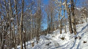 Winterwonderland. Snow covered road in the forest Stock Images