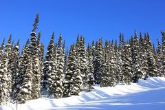 Winter wonderland royalty free stock images