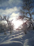 Winterwunder Lizenzfreie Stockfotografie