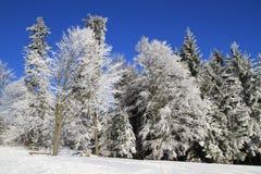 Winterwunderland stockfotografie