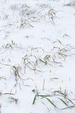 Wintery background Stock Photos